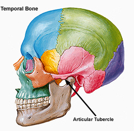 Articular tubercle Images