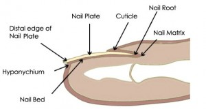Nail Plate Photos