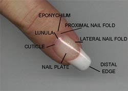 PIctures of Nail Plate