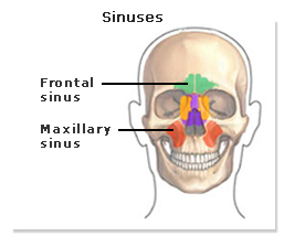 Photo of Frontal sinus