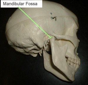 Picture of Mandibular fossa