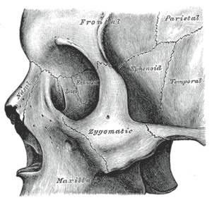 Picture of Zygomatic process