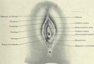 Picture of Vaginal orifice