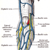 Images of Cephalic vein