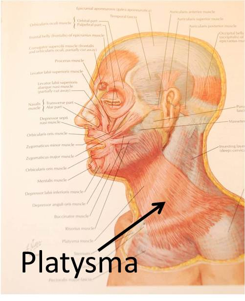 Pictures of Platysma