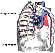 Photos of Azygos Vein
