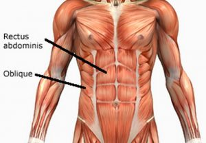 Rectus Abdominis Location