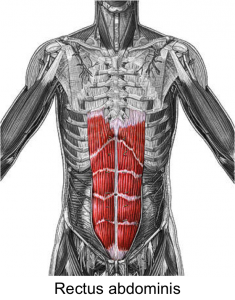 Picture of Rectus Abdominis