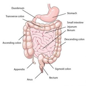 Sigmoid Colon Location