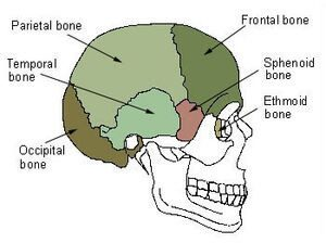 Sphenoid Bone Location
