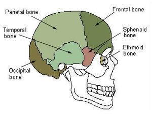sphenoid bone - location, function and anatomical structure, Human Body