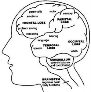 Parietal Lobe Function