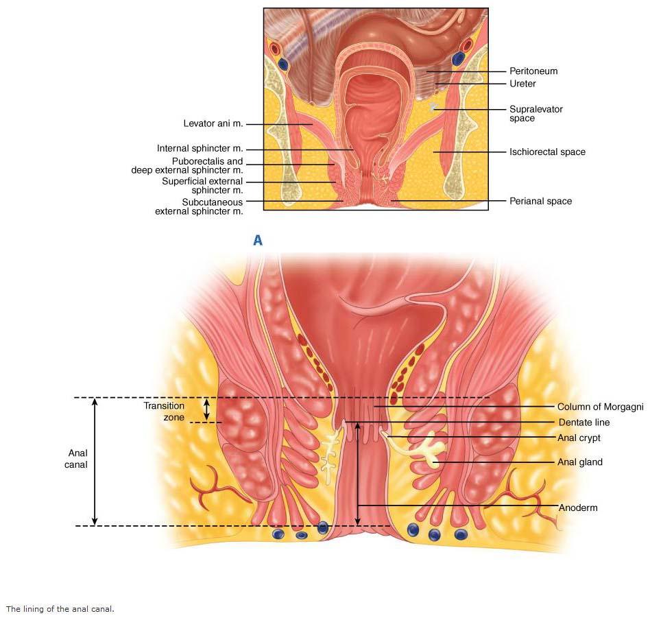 human-body-anus