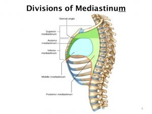 Mediastinum Location
