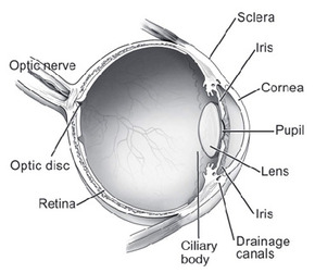 Image of Optic Nerve