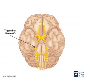 Picture of Trigeminal Nerve
