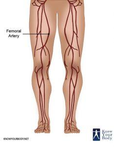 Femoral Artery Location
